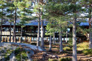 Utsikt över tallar från Matsalen